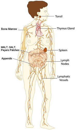 lymphedema massage therapy above amp beyond home health diagram of leg pain diagram of gallbladder pain